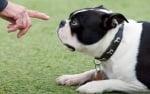 Команди за глухо куче