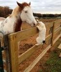 Кон и котка си раздават нежност