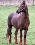 Конят Шейн