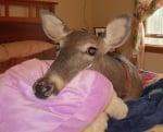 Кошутата Дили легнала на леглото си
