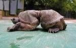 Костенурка, пострадала от хората