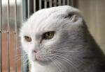 Коте без уши и нос