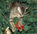 Коте дъвче коледна украса