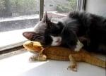 Коте гушка гущер