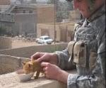 Коте, хранено от войник