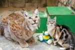 Коте и рис - приятели в зоопарк