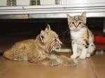 Коте и рисче в зоопарк