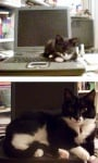 Коте на лаптоп
