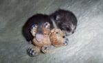Коте с плюшена играчка