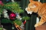 Коте си играе с коледна украса