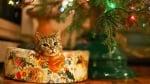 Коте спи под елхата