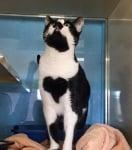 Коте със сърце на гърдите в приют