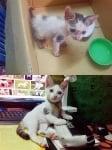 Коте у дома