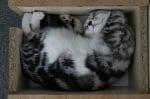 Коте в чекмедже