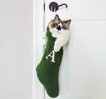 Коте в коледен чорап