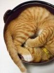 Коте в тиган