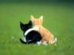 Котенца, които се прегръщат