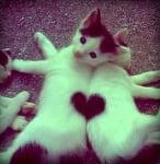Котенца сърчице