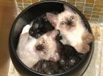 Котенца в тенджера