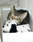 Котенце с плюшена играчка