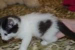 Котенце със сърчице