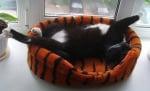 Котенце в тигрово легло