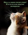 Усмихнат котешки понеделник