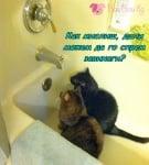 Котешки план