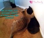 Котешки залог