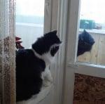 Котета на тераса