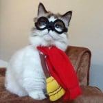 Котето Алберт с очила