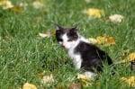 Котето Краси - нов дом