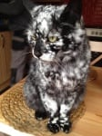 Котка черно-бяла