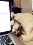 Котка до компютър