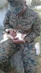 Котка, галена от войник