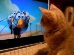 Котка гледа тв