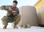 Котка, хранена от войник