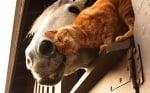 Котка и кон си раздават нежност