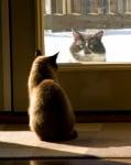 Котка и котарак