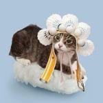 Котка индианец върху ориз за суши