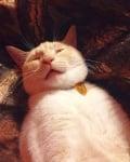 Котка, която се гали