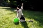 Котка, която си играе с балон