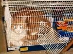Котка лежи в клетка за птици