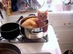 Котка лежи в тенджера