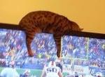Котка лежи върху телевизора