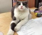 Котка лежи върху учебни материали