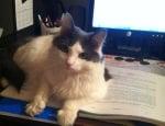 Котка лежи върху учебниците