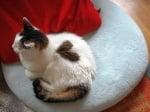 Котка лежи
