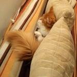 Котка на дивана