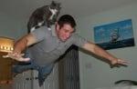 Котка на гърба на човек